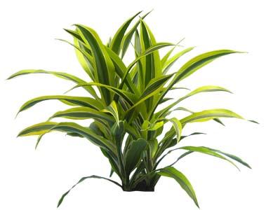 Low light indoor plants for Indoor green plants images