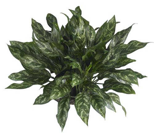 Low light indoor plants zz plants are great indoor plants that can tolerate low light - Best indoor plants for low light ...