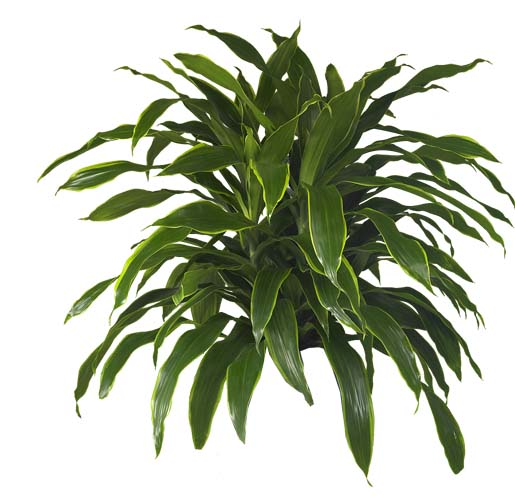 Low light indoor plants indoor plants hq your one stop for better houseplants with low light - Low light indoor plant ...